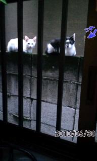 子猫(*^.^*)
