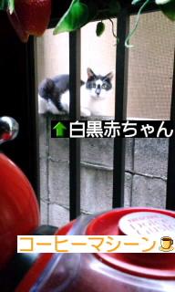 見てる…(●_●)