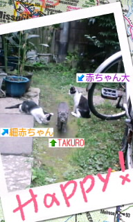 三匹(*^o^*)