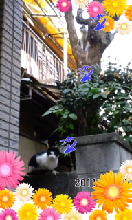 トーテムポール(?_?)