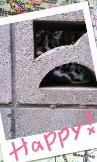赤ちゃんネコ(*^o^*)