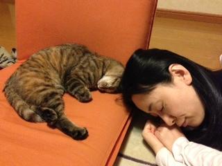 おやすみ (_ _).。o○