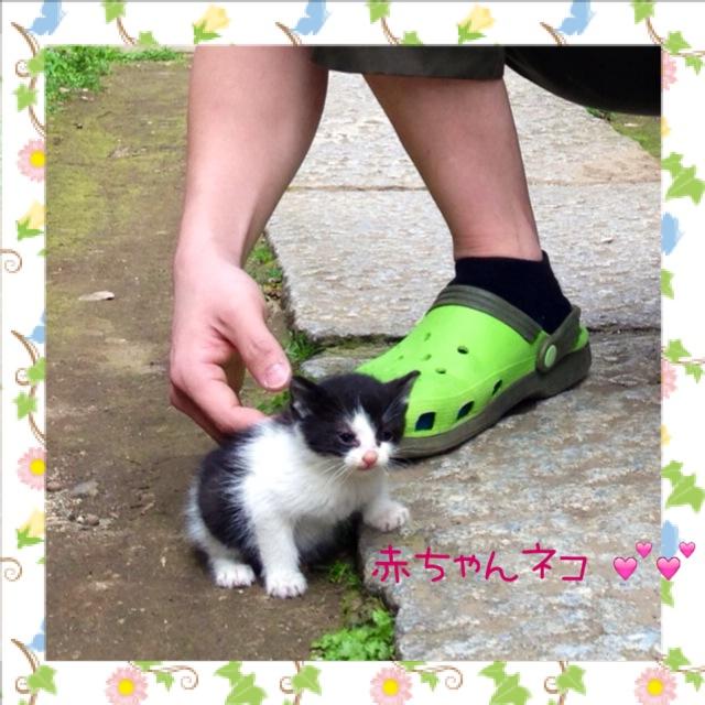 よちよち (=^ェ^=)