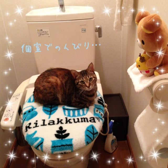 トイレの主 σ(^_^;)