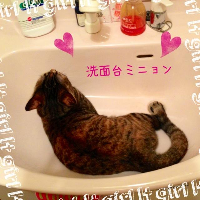 洗面台に…(^_^*)