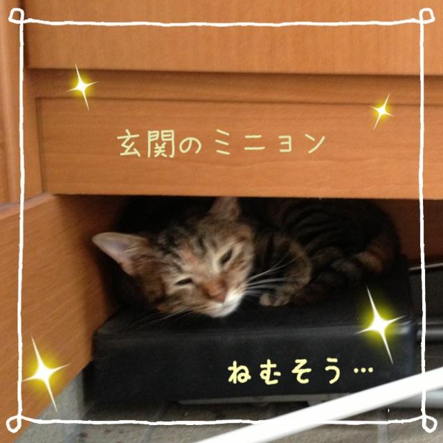 かわいいな(*^_^*)