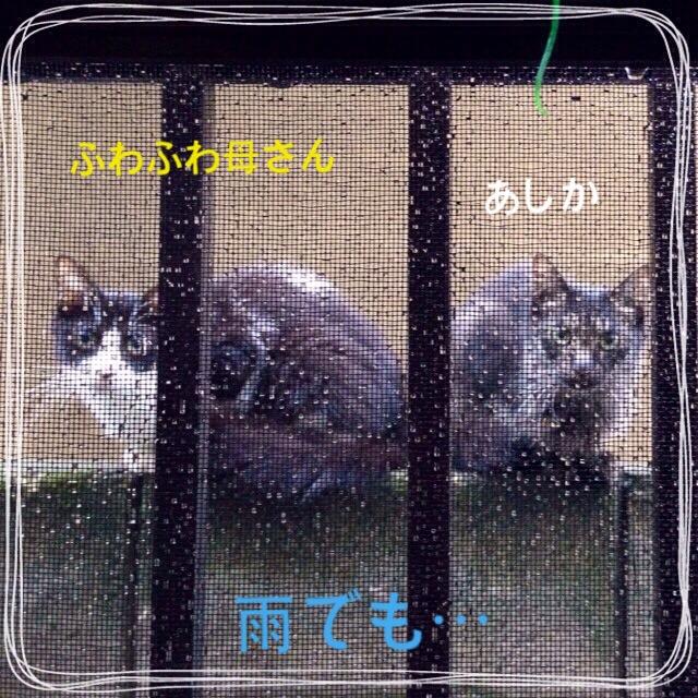 何かくれ(^_^;)